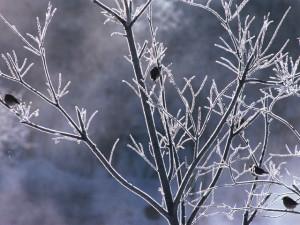 この冬一番の寒さ