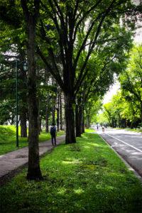 北海道大学構内